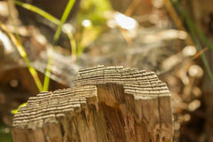 Slices of old wood. Close up of a slices of old wood Stock Photography