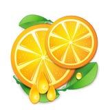 Slices orange Stock Images
