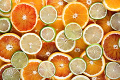 Slices of orange, lemon and lime Stock Image