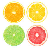 Slices of orange, pink grapefruit, lime and lemon. Isolated citrus. Slices of orange, pink grapefruit, lime and lemon fruits isolated on a white background to Royalty Free Stock Images