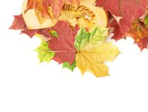 Slices of orange pumpkin in maple leaves Royalty Free Stock Photo