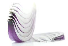 Slices of purple onion Stock Photography