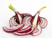 Slices of red onion Royalty Free Stock Photography