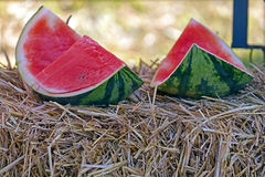 Slices of watermelon placed on a bale of straw Stock Image