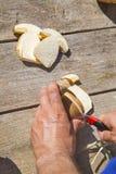 Slicing fresh Boletus Edilus mushrooms Stock Image