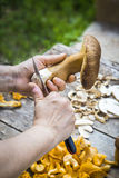 Slicing Fresh Edilus mushrooms on a wooden table Royalty Free Stock Image