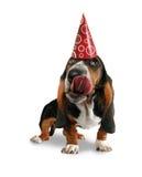 slicka för hund Royaltyfria Bilder