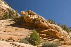 Slickrock landscape. View of sandstone landscape in Zion National Park Royalty Free Stock Photo