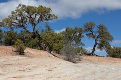 Slickrock und Wacholderbüsche auf der Band-Spur Lizenzfreies Stockbild