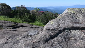 Slide Left Behind Rock to Reveal Rhododendron stock footage