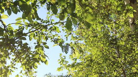 Slide move green leaves swaying in the wind in autumn fall morning. Summer stock video footage
