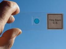 Slide for optical microscope Stock Image