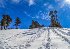 Slide Patterns in Snow. Snow and trees with beautiful sky in background at nag tibba, uttarakhand Royalty Free Stock Images