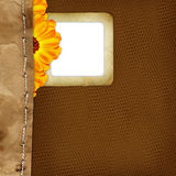 Slide for photo with flower on background Royalty Free Stock Photo