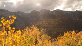 Slide rail shot of yellow aspens and rugged mountain peaks. Video of slide rail shot of yellow aspens and rugged mountain peaks stock footage