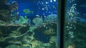 Slide shoot in oceanarium. Underwater world. Slide shoot in oceanarium. Underwater world stock video footage