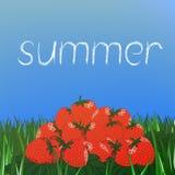 Slide strawberries on the grass. With sunlight Vector Illustration