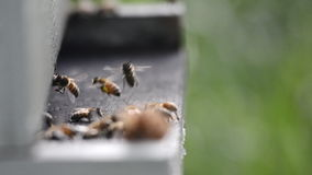 Slider of Bees entering hive stock video