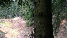 Slider do pinheiro video estoque