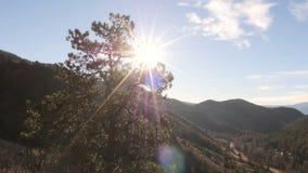 Slider do pinheiro do vale da montanha do nascer do sol do amanhecer video estoque
