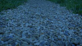 Crossing Gravel Path In The Evening
