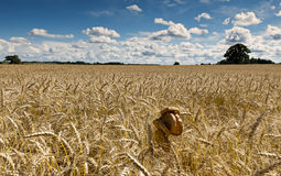 Slides of bread among field ripening cereals Stock Photography
