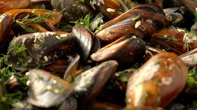 Sliding over sea mussels cooked with herbs stock footage