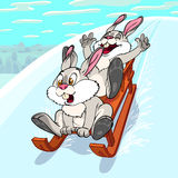 Sliding rabbits Stock Images