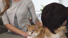Gorgeous woman petting her cat while at the vet clinic. Sliding shot of a beautiful happy red haired woman smiling to the camera petting her ginger cat while stock photo