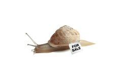 Sliding slug Royalty Free Stock Photography