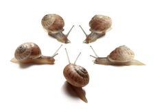 Sliding slugs group Stock Photography