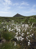 Slieve Donnard der höchste Berg in Nord-Irland Lizenzfreie Stockfotografie