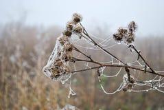 Slight frosts Stock Photos