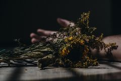 Slightly dried yellow flowers on a table in a dark room royalty free stock images