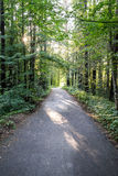 Slightly lit road in the forest. In summer Stock Photos