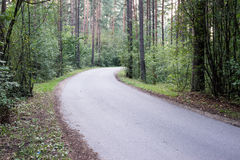 Slightly lit road in the forest. In summer Royalty Free Stock Photos