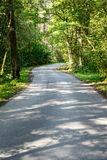 Slightly lit road in the forest. In summer Stock Images