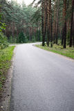 Slightly lit road in the forest. In summer Stock Image