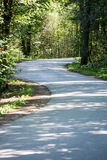 Slightly lit road in the forest. In summer Stock Photography