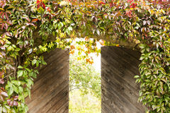 The slightly opened gate in the garden, overgrown with wild grapes Royalty Free Stock Images
