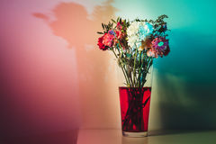 Slightly wilted flowers in red water. Flowers just starting to wilt in a tall transparent vase and red water on a white surface and in front of a white wall Royalty Free Stock Photos