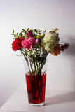 Slightly wilted flowers in red water. Flowers just starting to wilt in a tall transparent vase and red water on a white surface and in front of a white wall Stock Photo