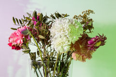 Slightly wilted flowers in a transparent vase. Flowers just starting to wilt in a transparent vase in front of a white wall colored green and purple using Royalty Free Stock Images