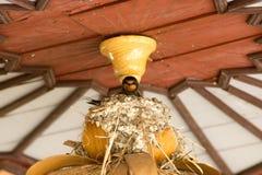 Slik in het nest royalty-vrije stock afbeeldingen