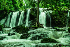 Waterfall and water stream with tree Stock Image