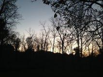 Slilouette von Bäumen lizenzfreie stockfotografie