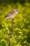 Slim bird on a slim branch. Small bird on a slim branch with unfocused background Stock Images