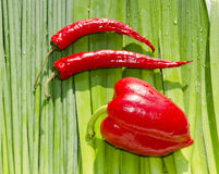 Slim and fat peppers. Royalty Free Stock Photo
