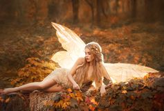 Slim girl became a fairy, a model with blond long hair and golden wreath on leaves in the forest in a beige long dress. With bare legs, has glowing wings behind royalty free stock image