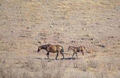 Slim horses Stock Images